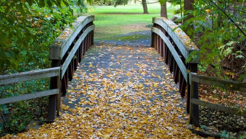 Meandering walking paths